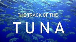 The Track of the Tuna