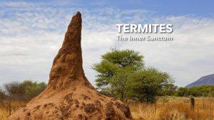 Termites: The Inner Sanctum