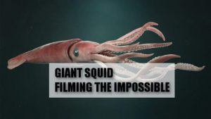 Giant Squid: Filming the Impossible