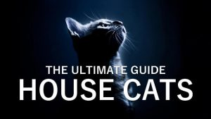 The Ultimate Guide: House Cats