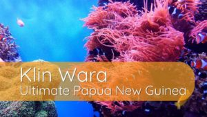 Klin Wara: Ultimate Papua New Guinea