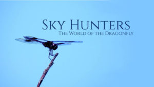 Sky Hunters: The World of the Dragonfly