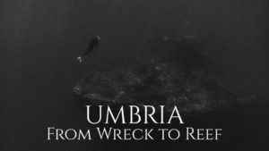 Umbria: From Wreck to Reef