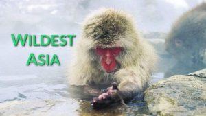 Wildest Asia