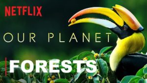 Our Planet: Forests