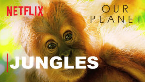 Our Planet: Jungles