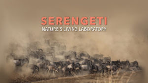 Serengeti: Nature's Living Laboratory