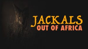 Jackals Out of Africa