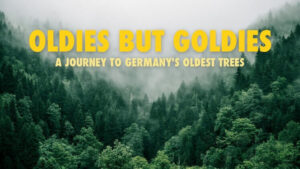 Oldies But Goldies: A Journey To Germany's Oldest Trees