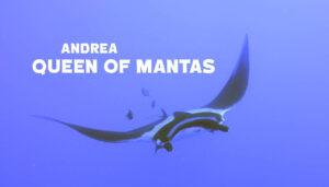 Andrea: Queen of Mantas